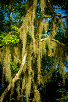 moss_palmetto-state-park_2015_kelly-morvant-photography-9866