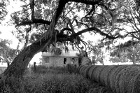 Early Morning_Shotgun House_Oak Tree_Fog_Hay_Vermilion Parish_B&W_Kelly Morvant Photography_10-12-14-7680