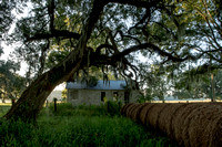 Early Morning_Shotgun House_Oak Tree_Fog_Hay_Vermilion Parish_Kelly Morvant Photography_10-12-14-7678