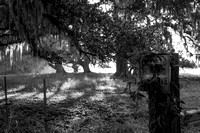 Early Morning_Oak Tree_Fog_Hunting Preserve_Vermilion Parish_B&W_Kelly Morvant Photography_10-12-14-7702