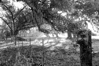 Early Morning_Oak Tree_Fog_Hunting Preserve_Vermilion Parish_B&W_Kelly Morvant Photography_10-12-14-7714