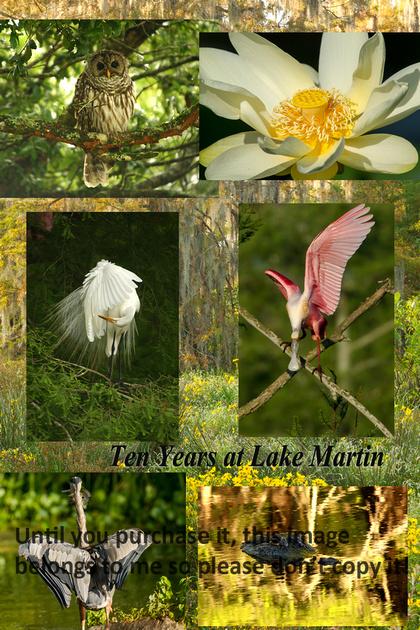 Lake Martin 10 Years Collage