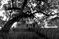 Early Morning_Shotgun House_Oak Trees_Fog_Vermilion Parish_Kelly Morvant Photography_10-12-14-7681