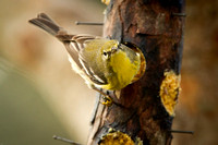 Finch-MarylinMorvant_Kaplan-0168