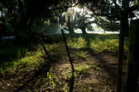 Early Morning_Fence_Moss_Oak Trees_Vermilion Parish_Kelly Morvant Photography_10-12-14-7723