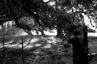 Early Morning_Oak Trees_Moss_Hunting Preserve_Vermilion Parish_B&W_Kelly Morvant Photography_10-12-14-7707